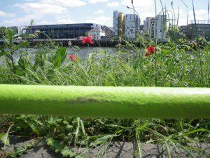 La ligne verte devant les bords de Loire